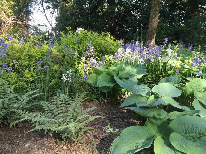 Spring Woodland Garden