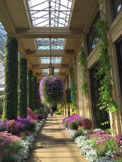 October At Longwood Gardens Mum 39 S The Word Here By Design