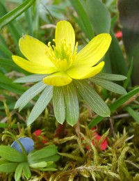 Photo: plant-and-flower-guide.com