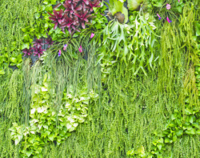 Photo: Aminsen/Shutterstock.com