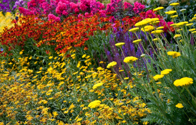 Cliveden 'hot' border: flicker.com