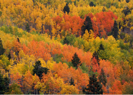 Green, yellow and red aspens on a hillside in Taos, New Mexico