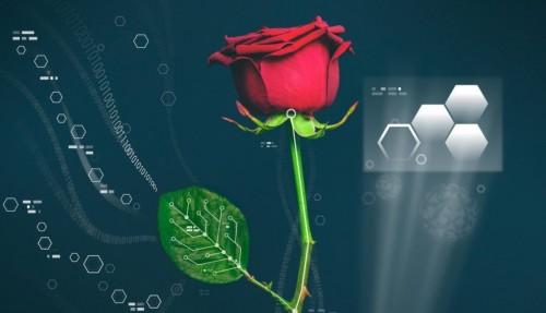 02ae794c8eCyborg-Rose-Linköping-University-in-Sweden-Laboratory-of-Organic-Electronics-889x510-500x287