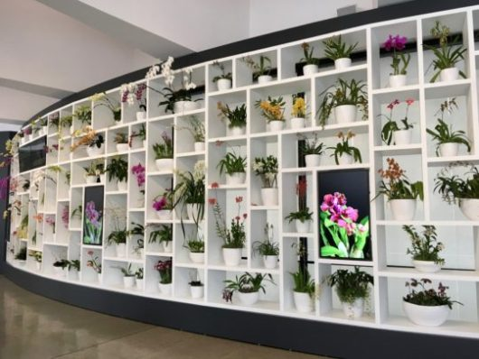 hirshshorn orchid display