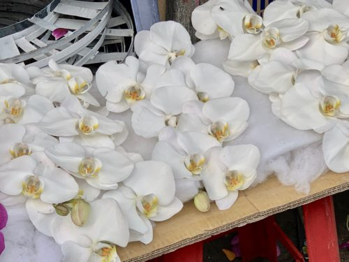 Orchid blossoms for sale at Ho Thi Ky flower market