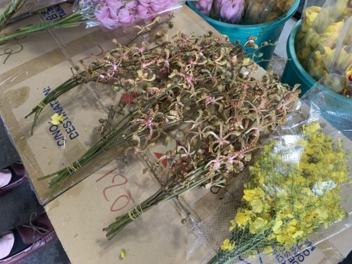 Orchids for sale at Ho Chi Minh's largest wholesale flower market